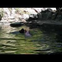 【動画】溺れる子ヤギを助けたのは…?