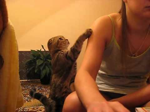 【癒し】かまって欲しい猫に萌え死ぬ