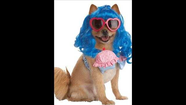 犬用ハロウィン衣装がカワイイ