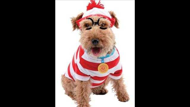 犬用ハロウィン衣装4