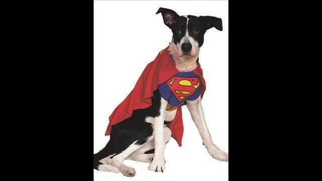 犬用ハロウィン衣装2