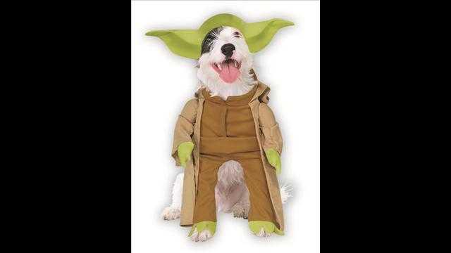 犬用ハロウィン衣装3
