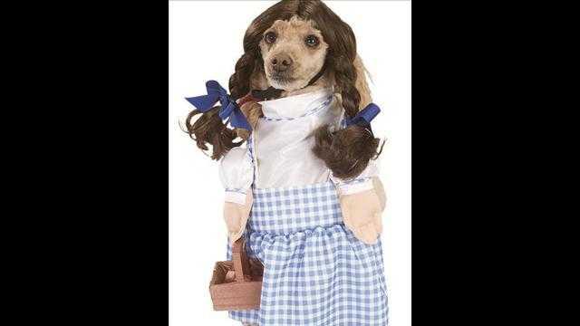 犬用ハロウィン衣装5