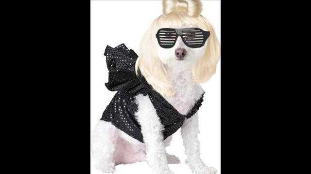 犬用ハロウィン衣装1