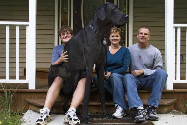 世界一大きい犬の写真1