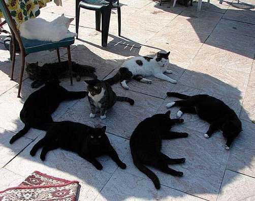 周囲を完全に包囲された猫の写真