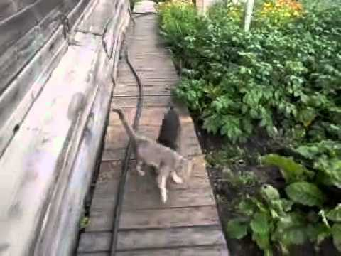 【動画】猫をおんぶして連れて帰る犬が可愛いw