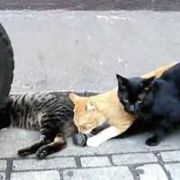 【動画】猫のしっぽにマタタビふりかけてみたら・・・