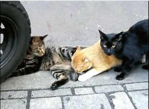 臭われているのに気づいた猫のシーン