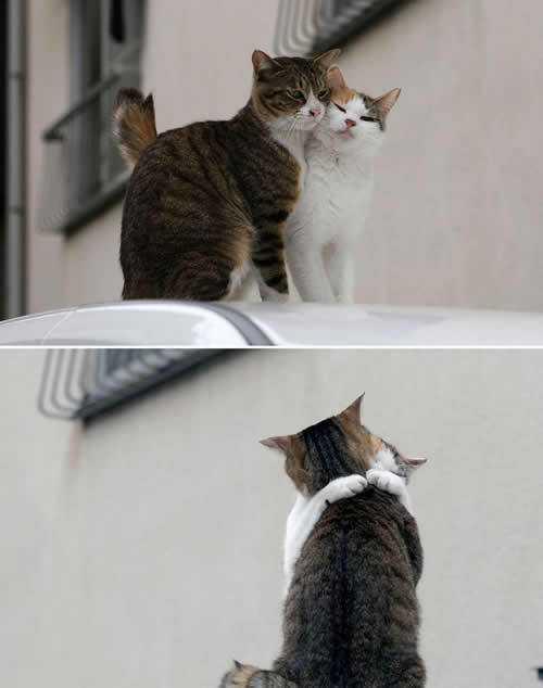 仲良しの猫の画像