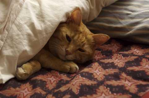 【珍品】布団型のマウスパッドがアホっぽくてカワイイ