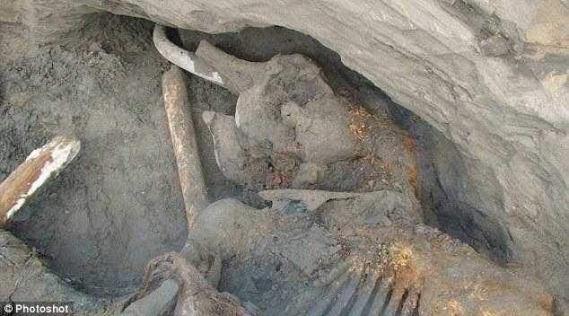 マンモスの化石の写真3