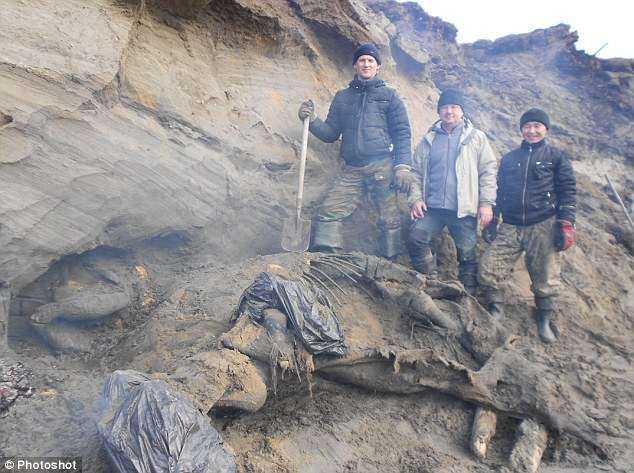 マンモスの化石の写真1