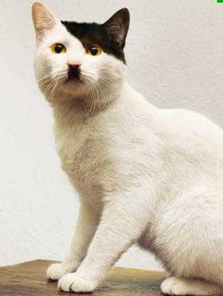 ヒトラーみたいな猫の画像1