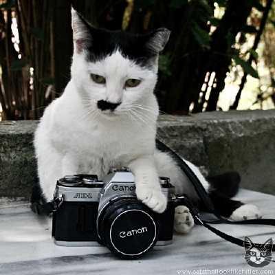 ヒトラーみたいな猫の画像5