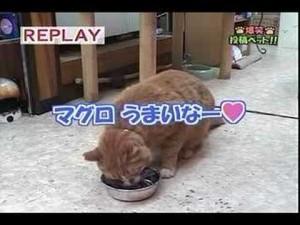 【動画】「マグロうまいうまい・・・マグロうまいな~・・・」としゃべる猫
