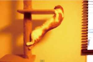 「猫失格!」と言わざるを得ない情けないニャンコ動画