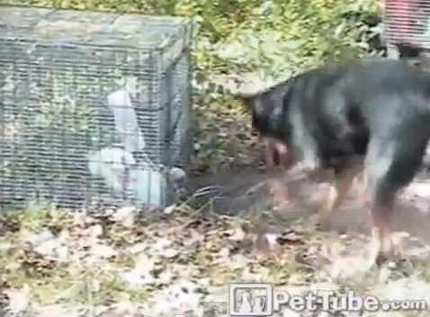 【動画】ウサギ「HELP!!」犬「絶対に死なせやしない!!」