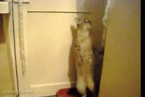 「何ジロジロ見とんねん!!見世物ちゃうで!!」ってなっちゃう猫がカワイイ