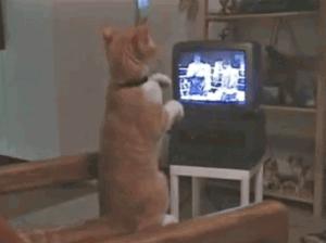 【動画】ボクシングの試合を見ながら猫パンチの練習をする猫がカワイイwww