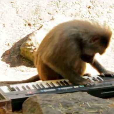 【動画】6種類の猿にシンセサイザーを演奏させてみたら?