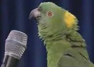 【動画】信じられないくらい歌うオウムがカワイイw