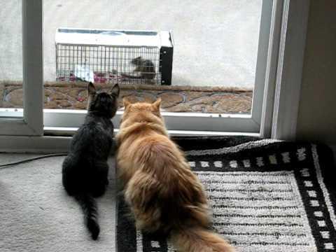 シマリスを見つめる2匹の猫の写真