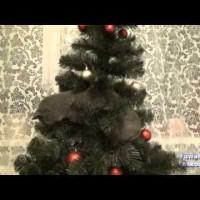 【動画】クリスマスツリーにとんでもない飾りが!!www