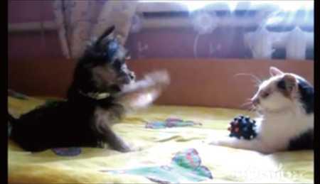 【動画】「玩具返して!」と必死に訴える子犬と返さない猫がカワイイ!!
