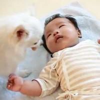 【動画】泣いている赤ちゃんにお菓子を持ってくる健気なチワワ