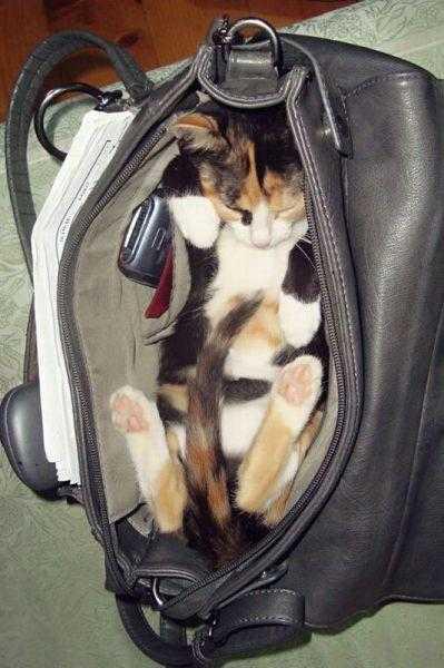鞄の中で寝ている猫の写真