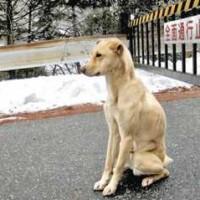 長野県飯田市上飯田の大平街道で飼い主をじっと待つ犬の写真がTwitterで話題、地元の新聞にも掲載。