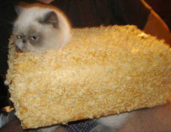 ティッシュケースに入ってるいる猫