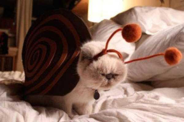 カタツムリ型の猫用着包み