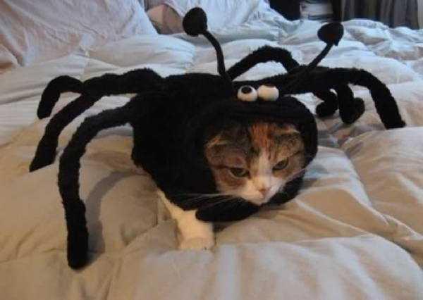 蜘蛛型の猫用着包み