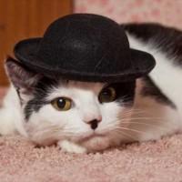 masons_chaplin_cat_02-jpg-ay_100089294-jpg