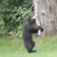 【動画】ある日突然、庭に子グマがやってきて遊具で遊び始めた!