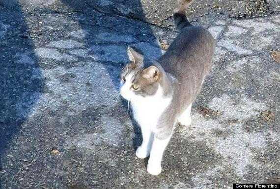 亡き飼い主の墓にお供え物をする猫「トルド」がイタリアで話題