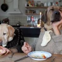 【動画】忙しいレストランで料理を待つ2人・・・匹!?