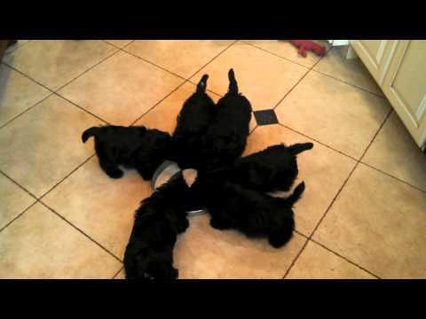 【動画】子犬達にミルクをあげたら風車みたいになった!!