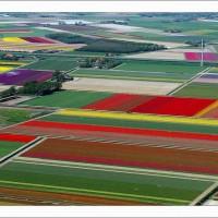 【オランダ】チューリップ畑を空中から撮影した写真が素晴らしい!