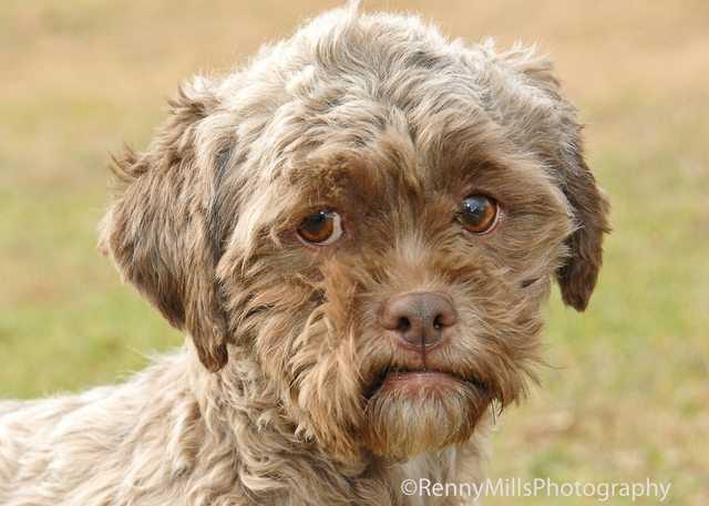 【画像】人間ぽい顔をしたミックス犬「Tonik」が話題