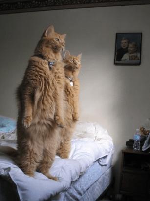 【動画】物凄く立ち食いする猫