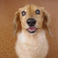 【翻訳版】「犬の表情や仕草がどんな感情を表しているかを示す画像」