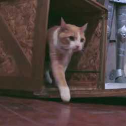 【動画】猫も一役買うピタゴラ装置「To All Humans, Happy Holidays」が面白い!