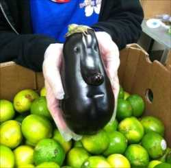 【画像】リアルすぎる「人面茄子」が話題