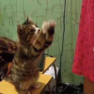 【動画】「なでなでして!」物凄く具体的にアピールする猫が可愛い
