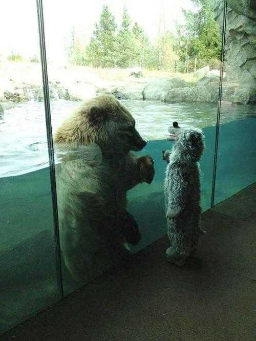 【画像】可愛すぎる・・・見つめ合う大きな白クマと小さな白クマ