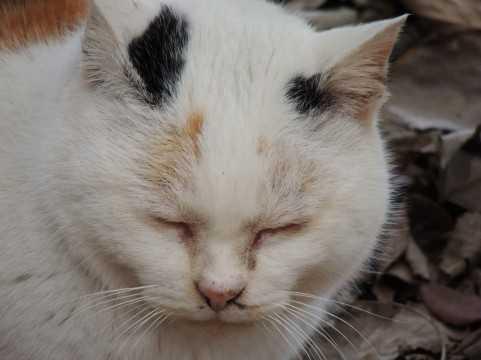 【業界初】猫を飼うほど賃貸料が安くなる「猫割」マンションが話題