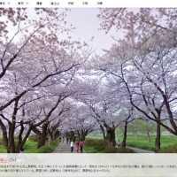 【全国50箇所】Googleストリートビューで桜の名所が巡れるよ!